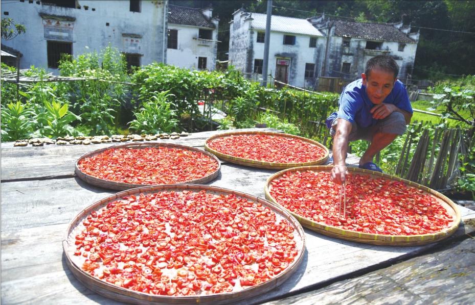 贵州省强化辣椒质量和品牌建设引领国内辣椒产业发